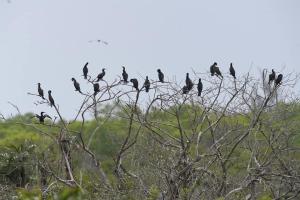 Vườn chim Bạc Liêu | Thuê Xe Cần Thơ