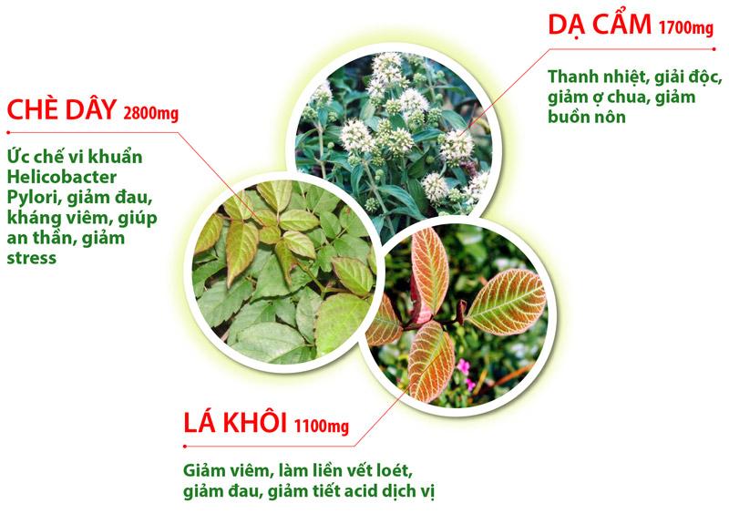 3 loại thảo dược quý trong điều trị viêm loét dạ dày có vi khuẩn HP