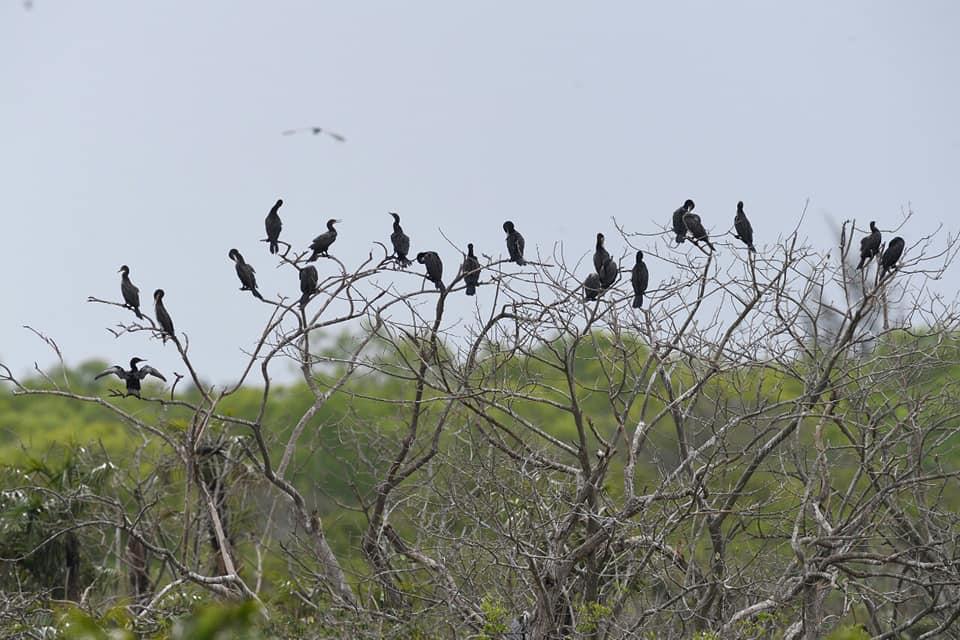 Vườn chim Bạc Liêu   Thuê Xe Cần Thơ